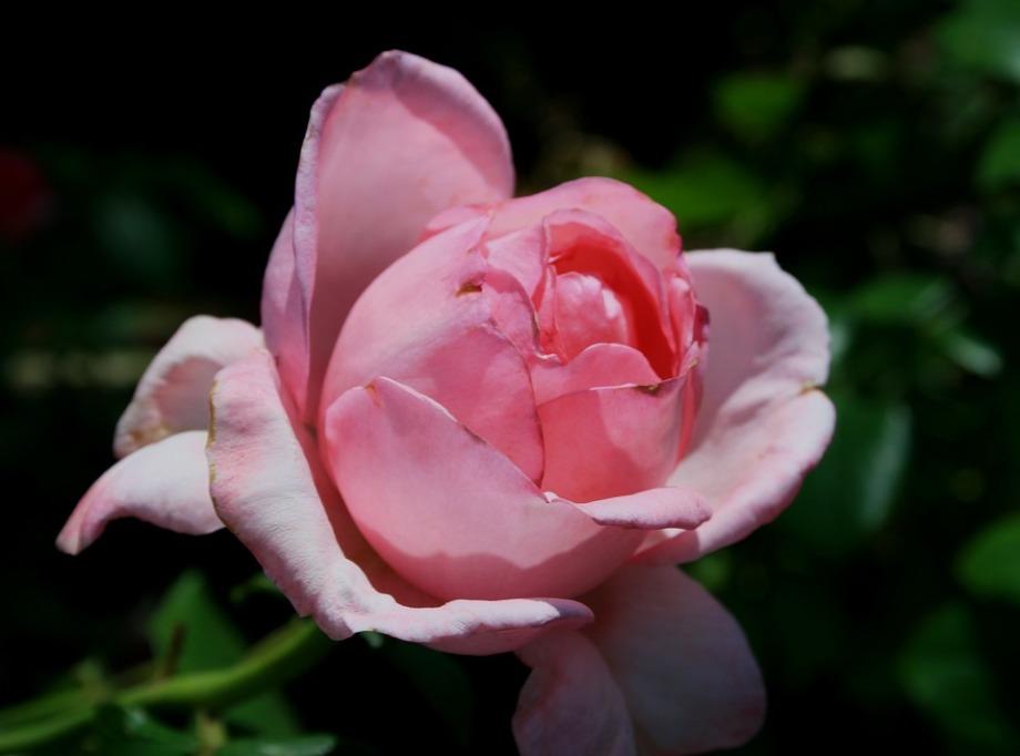 flower-205061_960_720